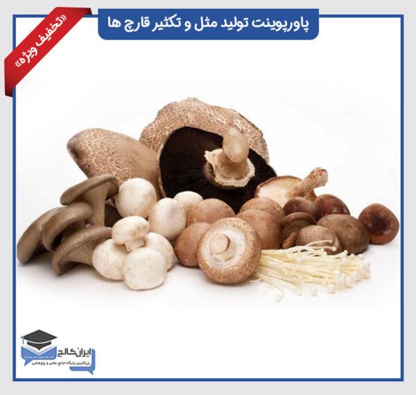تولید مثل و تکثیر قارچ ها